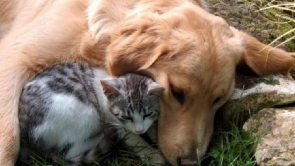 Обсъждат мерки за решаване на проблема с бездомните животни в Русе