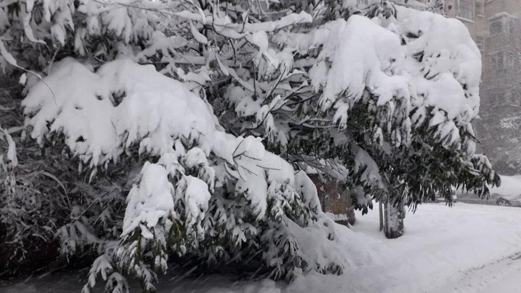 Снегът изпочупи дървета, прекъсна тока в част от селата в Русенско