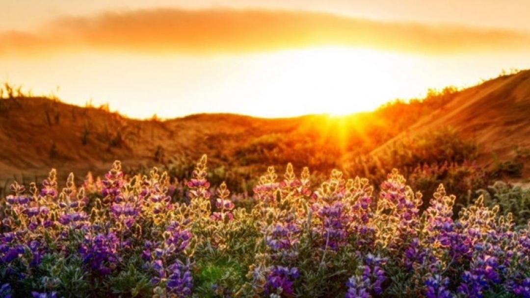 Еньовден – денят на лятното слънцестоене