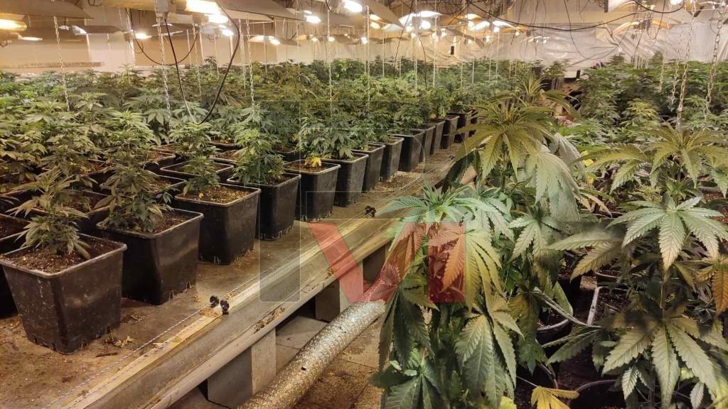 Разбиха наркооранжерия за марихуана в Бяла