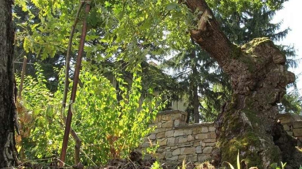 3 дни остават до края на гласуването в конкурса за любимо дърво на Европа