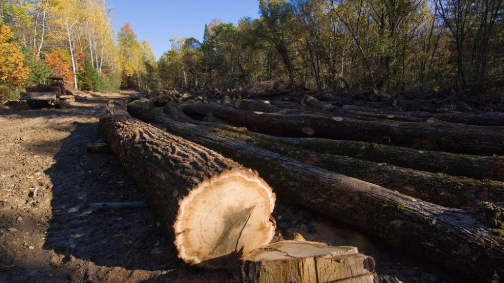 Пуснаха мобилно приложение за подаване на сигнали за незаконни дейности в гората