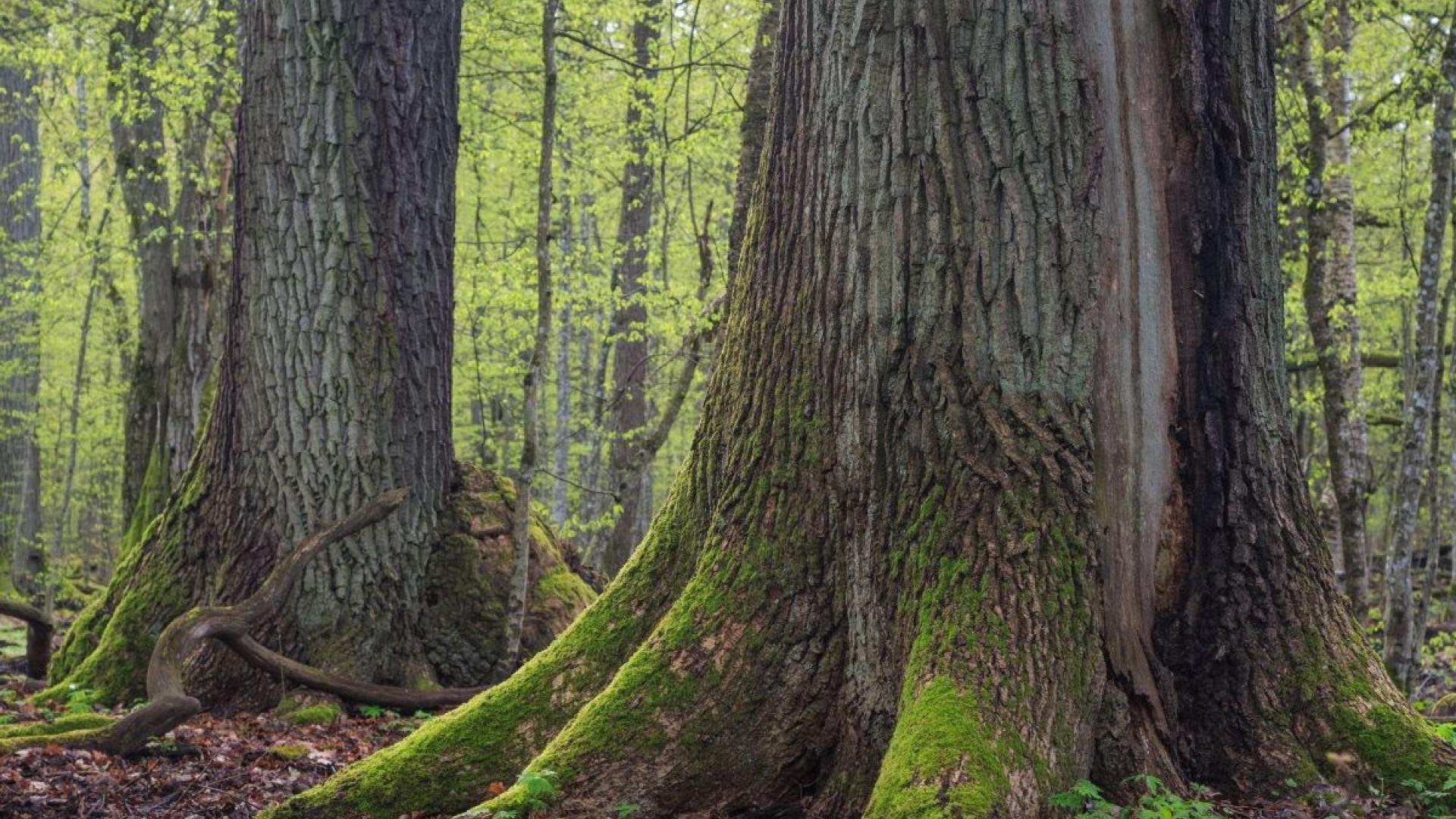 WWF картира най-ценните гори у нас, собственост на общините