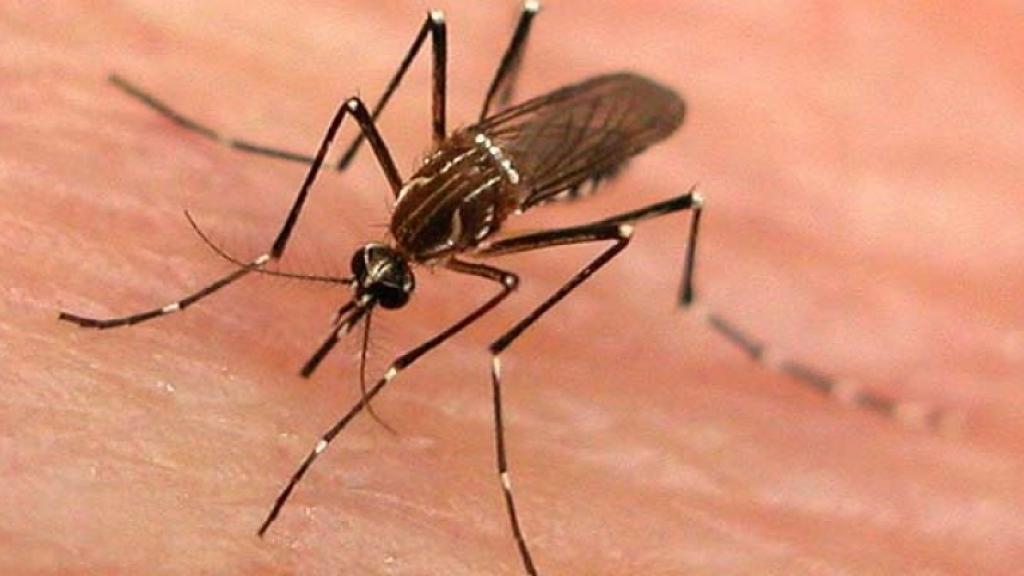 Започва пръскането срещу комари и кърлежи