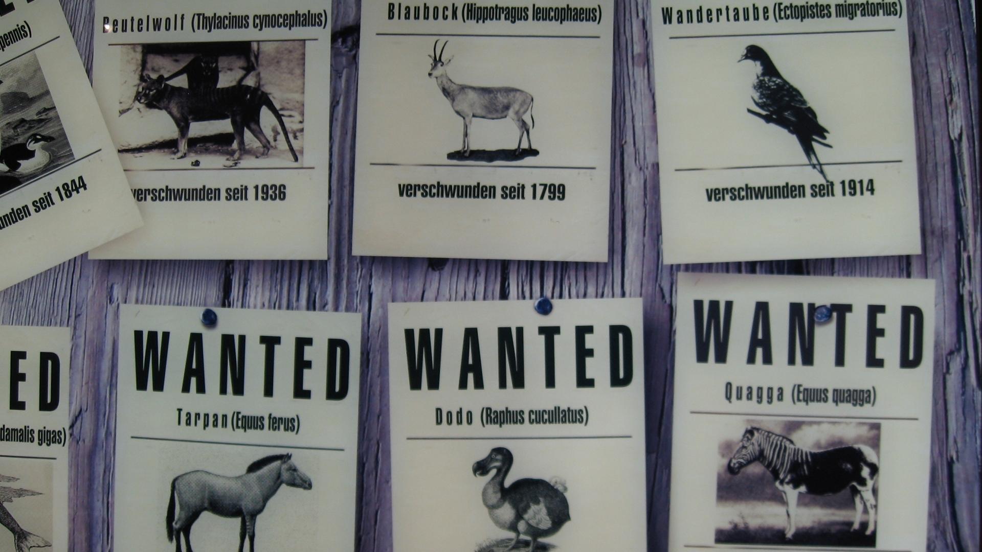 Русенският музей с изложба посветена на търговията със застрашени растения и животни