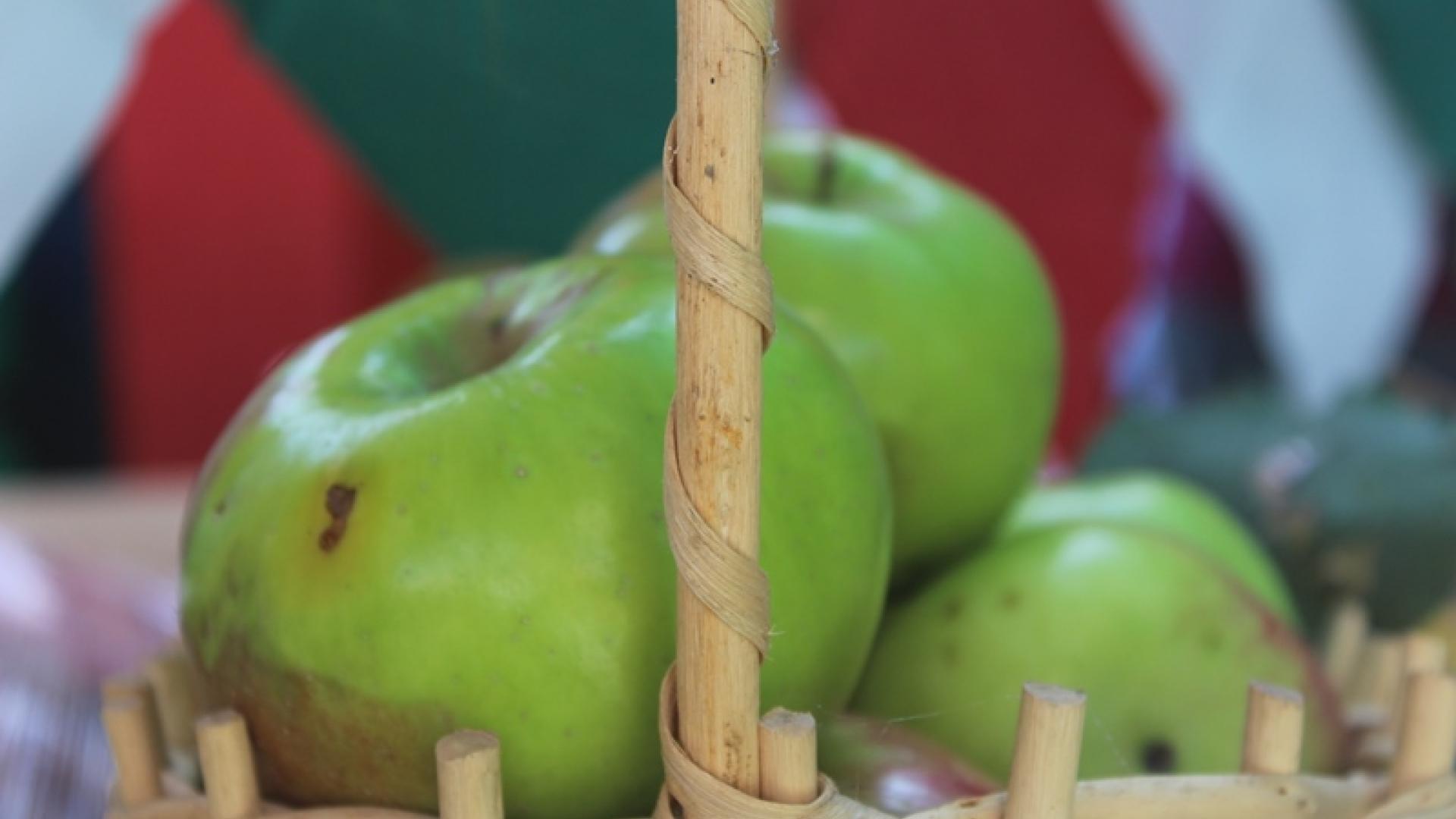26 сорта ябълки представиха на традиционния празник на ябълката в Екзарх Йосиф