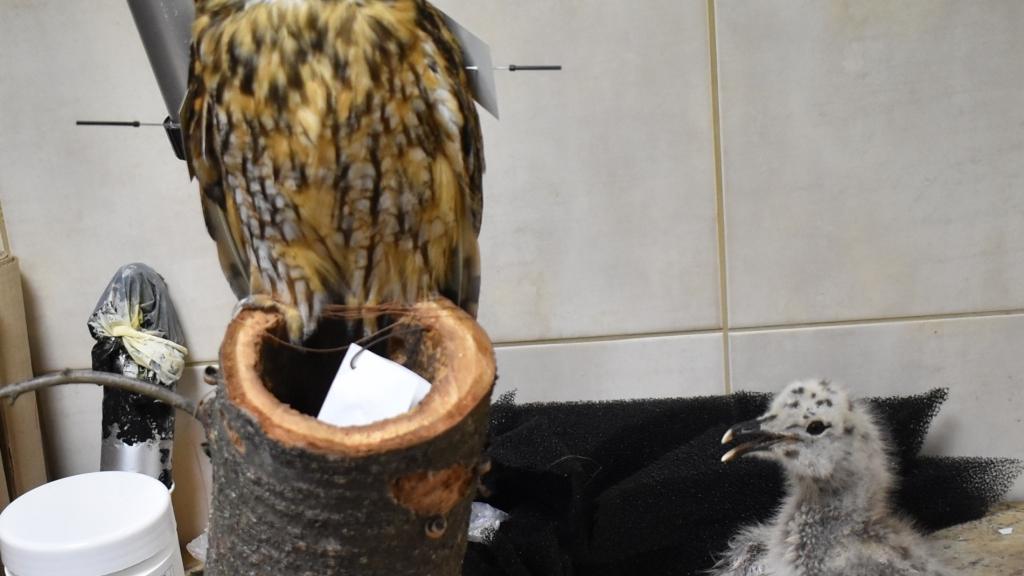Четири нови птици попълниха фонда на Екомузея